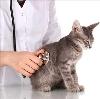 Ветеринарные клиники в Бытоши